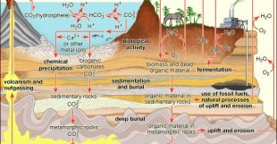 chemical precipitation: terrestrial carbon cycle [Credit: Encyclopædia Britannica, Inc.]