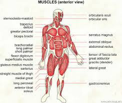 This is your whole body on muscles