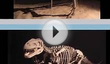 Gasosaurus - Video Learning - WizScience.com