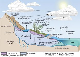 water cycle: processes [Credit: Encyclopædia Britannica, Inc.]
